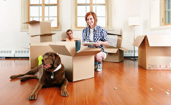 Comment déménager avec ses animaux de compagnie