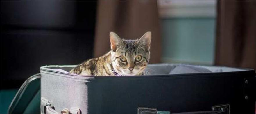 demenagement Lausanne avec un chat