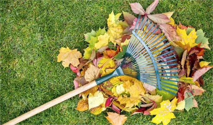 jardinage, bien nettoyer, jardin